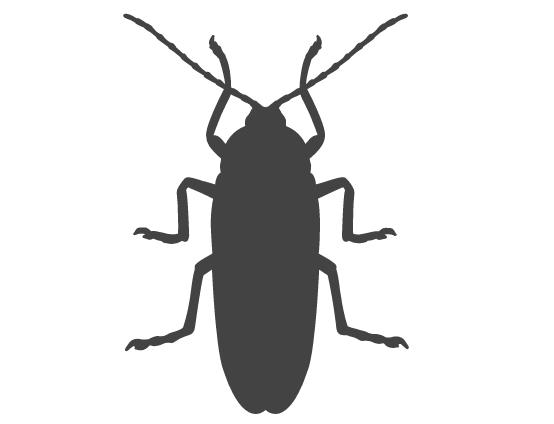 skadedyrsbekæmper af kakerlakker