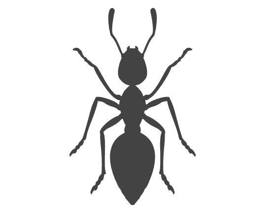 skadedyrsbekæmper af myrer