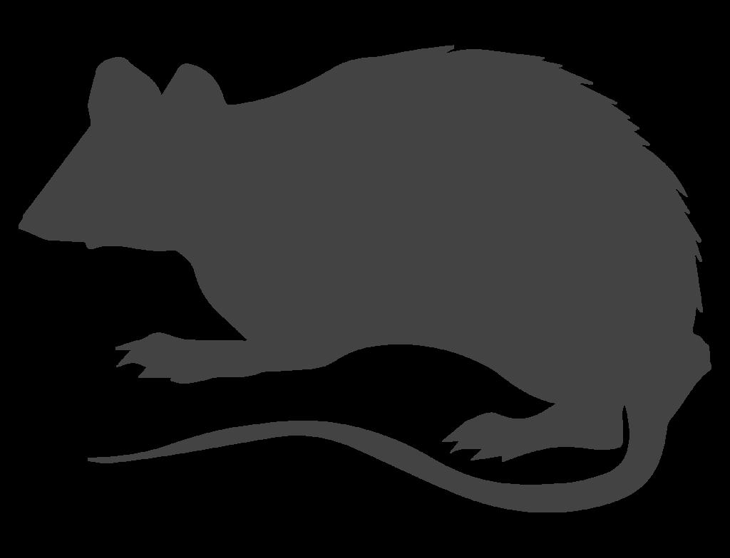 skadedyrsbekæmper af rotter