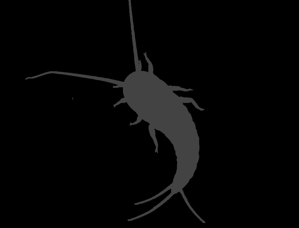 skadedyrsbekæmper af sølvfisk